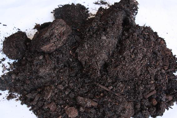 cow and pig manures Guidelines for using animal manures and cow 650 lbs 2 lbs 25 lbs poultry dog or pig manure in your compost pile or your vegetable garden.