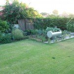 15 month old Lawn layed with Mumby Magic