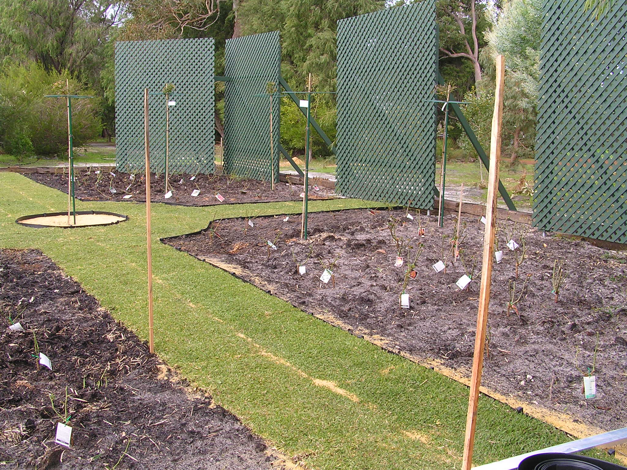 Rose Garden with Mumby application and just before Karri and Peat Mulch